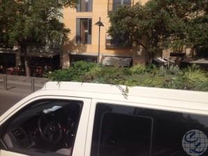 vehículo plantas